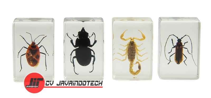 Review Spesifikasi dan Harga Jual Celestron 3D Bug Specimen Kit #1 original termurah dan bergaransi resmi
