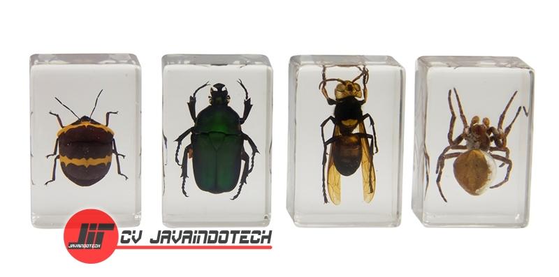 Review Spesifikasi dan Harga Jual Celestron 3D Bug Specimen Kit #2 original termurah dan bergaransi resmi