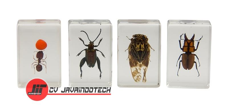 Review Spesifikasi dan Harga Jual Celestron 3D Bug Specimen Kit #3 original termurah dan bergaransi resmi